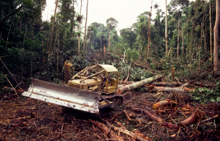 tree harvesting site